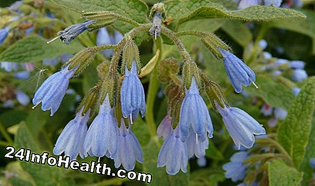 Wellness: Comfrey: Herbal Remedies