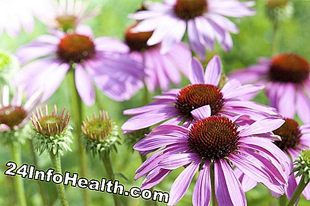 Echinacea: Herbal Remedies