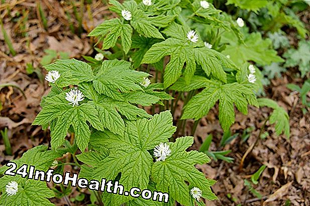Wellness: Goldenseal: Herbal Remedies