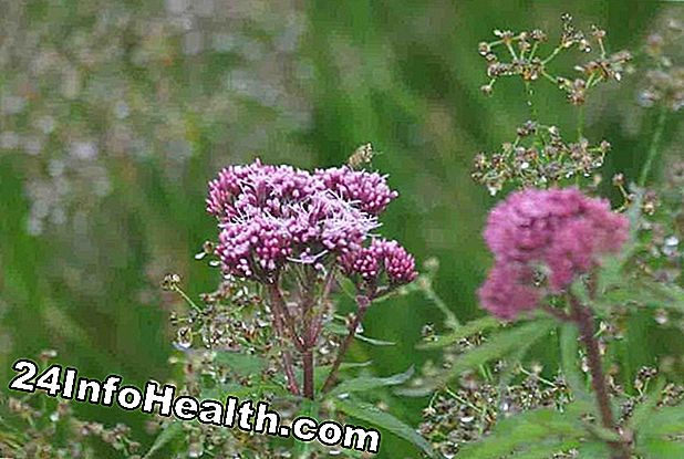 Wellness: Valerian: Herbal Remedies