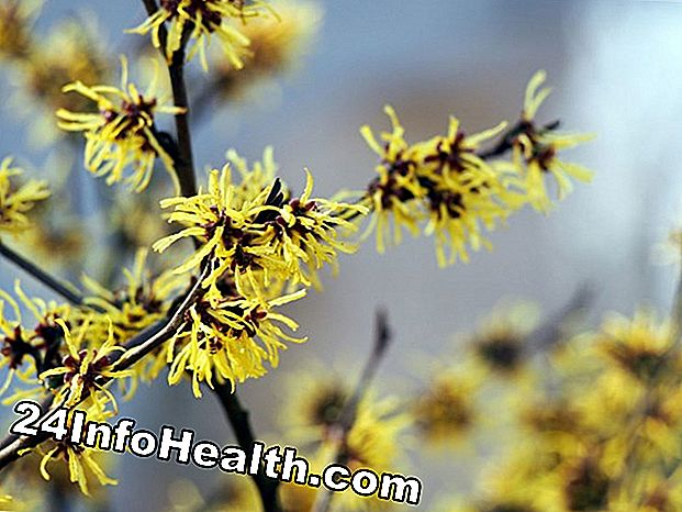 Wellness: Witch Hazel: Herbal Remedies