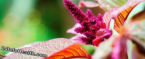 Wellness: Amaranth: Natural Weight-Loss Food