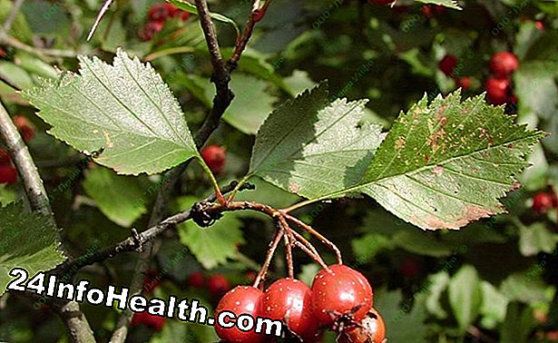 Hawthorn: Herbal Remedies