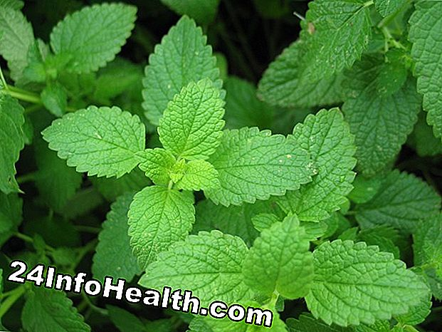 Peppermint: Remedies Herbal