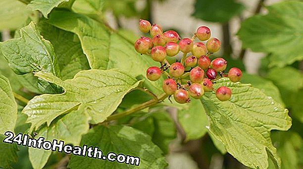 Kesihatan: Cramp Bark: Remedies Herbal