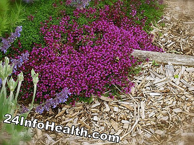 Thyme: Remedies Herbal